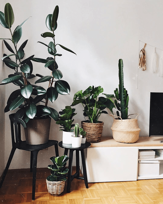 Get some plants and 8 Other Ways To Update Your Home On A Budget. I was looking for unique and fun ways to spruce up my home, either with accents, plants, or wallpaper. these are some budget-friendly ways to make a room come to life. #homedecor #home #homeinspo
