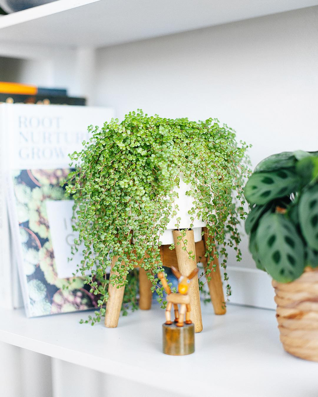 What are the best pet-safe houseplants?! These gorgeous plants are decorative and completely safe for cats and dogs! Dog and Cat safe plants that you don't have to worry about whatsoever! Find your favorite pet friendly house plants #houseplants #petsafehouseplant