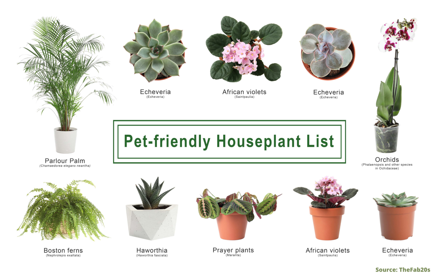 Pet-Safe houseplants that are perfect for dogs and cat owners. These Pet-friendly plants are nontoxic and a beautiful decor idea